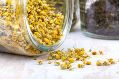 Dried camomile flowers Stock Photo
