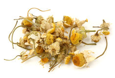 Dried camomile tea Stock Photography