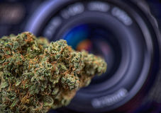 Dried cannabis bud in front of digital camera lens - marijuana p Royalty Free Stock Photo