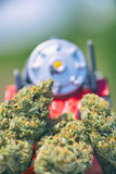 Dried cannabis buds Train Wreck strain with plastic toy - medi stock photography