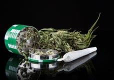 Dried cannabis plant, marijuana Royalty Free Stock Photography