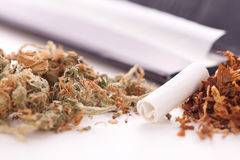 Dried Cannabis on Rolling Paper with Filter. Close up Dried Cannabis Leaves on a Resealable Cellophane Wrapper and a Rolling Paper with Filter on Top of the Stock Photo