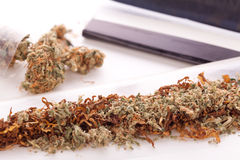 Dried Cannabis on Rolling Paper with Filter Stock Photo