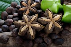 Dried capsule seeds fruit of sacha-Inchi peanut. On wooden stock photos