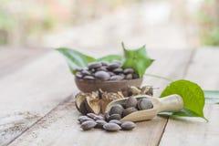 Dried capsule seeds fruit of Sacha Inchi peanut Royalty Free Stock Photos