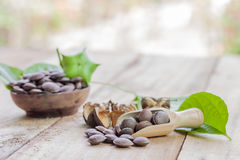 Dried capsule seeds fruit of Sacha Inchi peanut Royalty Free Stock Images
