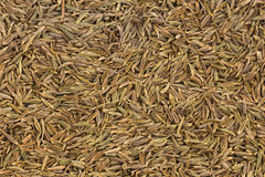 Dried caraway fruits (often termed caraway seeds) Stock Photo