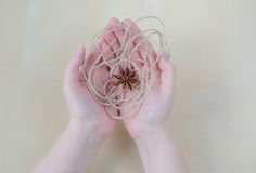 Dried carnation and twine on woman hands. Stock Images