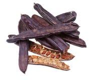 Free Dried Carob Pods Stock Photography - 32027812
