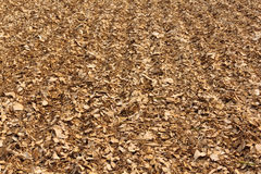 Dried cassava Stock Images