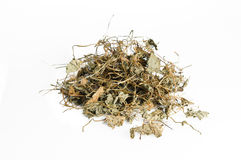 Dried Centella asiatica or Thankuni in Indian, Buabok in Thailan Royalty Free Stock Photos