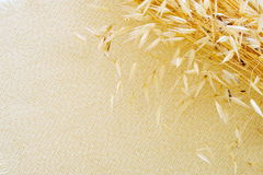 Dried cereal plant Royalty Free Stock Image