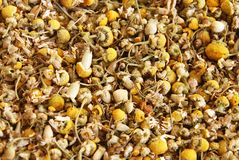 Dried Chamomile Stock Images