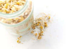 Dried Chamomile. Close up dried Chamomile of white background Stock Photos