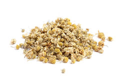 Dried chamomile Obraz Royalty Free
