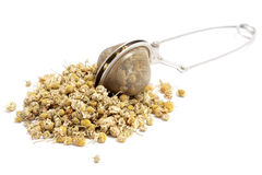 Dried chamomile Obrazy Royalty Free