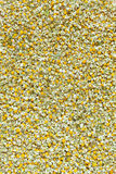 Dried chamomile blooming flowers texture Royalty Free Stock Photos