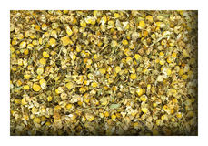 Dried chamomile Royalty Free Stock Photo