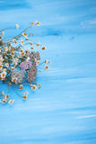 Dried chamomile flowers. Royalty Free Stock Photo