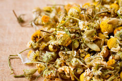 Dried chamomile flowers macro Stock Photos