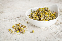 Dried chamomile flowers Royalty Free Stock Photo
