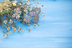 Dried chamomile flowers on wooden background. Royalty Free Stock Photography