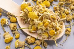 Dried chamomile flowers in a wooden spoon on a gray plate royalty free stock image