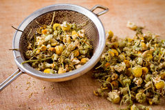 Dried chamomile with metal filter Royalty Free Stock Photo