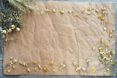 Dried chamomile on old paper royalty free stock photography