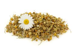 Dried chamomile tea. Isolated on white background royalty free stock photos