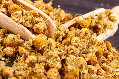 Dried chamomile on wooden table, alternative medicine Stock Photography