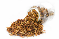 Dried chanterelle mushrooms in a jar Royalty Free Stock Image