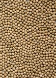 Dried chick peas background stock image