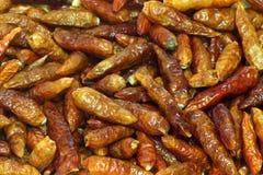 Dried chili stock image