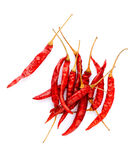 Dried chili isolated  Stock Photography