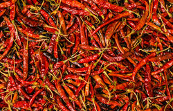 Dried chili Royalty Free Stock Photo
