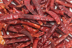 Dried chili Royalty Free Stock Photos
