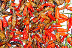 Dried chili background texture Royalty Free Stock Photos