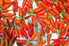 Dried chili background texture Royalty Free Stock Photography