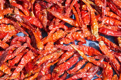 The dried chili in closeup scene. Royalty Free Stock Images