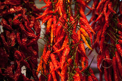 Dried chili peppers Stock Photography