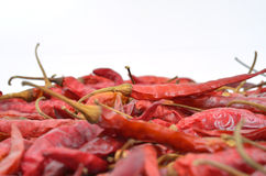 Dried Chili Peppers Royalty Free Stock Images