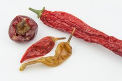 Dried chili peppers on a white background. Strong spices Stock Photos