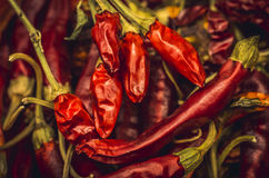 Dried chili. Red background of dried chilies Royalty Free Stock Image