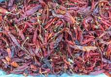 Dried chili Royalty Free Stock Images