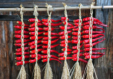 Free Dried Chili S Hanging On Wall Royalty Free Stock Photo - 40377835