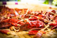 Dried chilies ready for cooking stock image