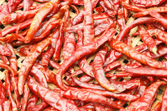 Dried chilies. Stock Photos