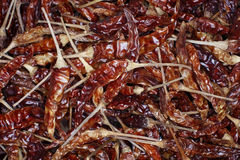 Dried chilli Stock Images