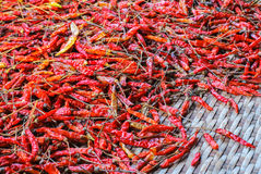 The Dried Chilli Royalty Free Stock Images